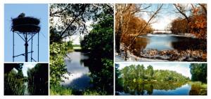 2012-11 Postkarten Dahlewitzer Ansichten-web_Seite_17